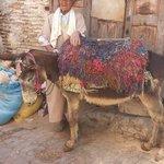 Fes Medina Mule Marokko
