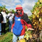 doug, on tour, explaining the growth of grapes
