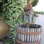 Jasmine and old wine press