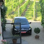 Even our car had a shady spot in the vines