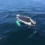 Humpback whale swam right under our boat!