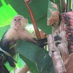 Monkey !!
