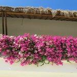 Beautiful flora around Grand Velas resort
