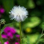 A Beautiful White Flower