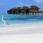 Water Villas (and a cheeky Heron)