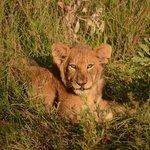 Styx pride cub