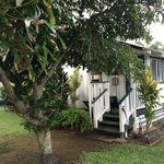Garden Cottage with mango tree