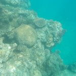 A coral garden seen whilst snorkelling
