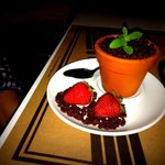 A knockout Tiramisu served in a plant pot