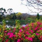 beautiful lake and gardens