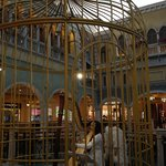 Harp musician performing in the cage  - www.adriennehoxy.com