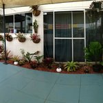 Another new garden in pool area