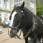 Horse and carriage ride in Cockington