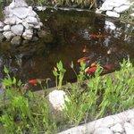 balıklar havuzu
