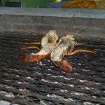 Le cuisto nous avait invités à voir la cuisson du homard