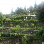 The 'garden' of Villa Maria
