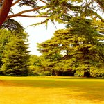 Trees on the grounds