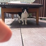 Cat came up to the deck