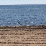 Starlite Beach
