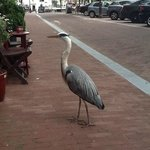 my breakfast companion outside the Amsterdam House Hotel