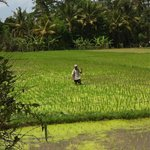 Locals working at the paddy fields