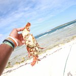 Fresh and grilled lobster on Sandy Island
