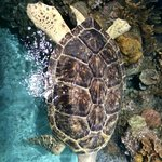 Awesome Aquarium!