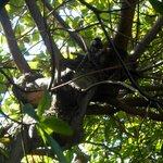 Na área de convivência, árvores e presença de saguis