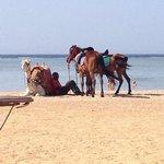 cammello e cavalli in spiaggia
