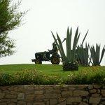 Grounds Gardener