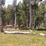 Aspen ride