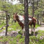Torrey to Boulder ride