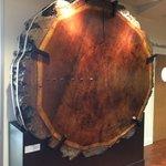 Fascinating 800 yr old tree exhibit