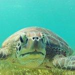 Shot of a turtle at Akumal