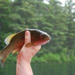 A fish ;) catch & release