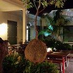 arbre suspendu, visible dans le patio