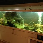 well stocked Lobster tank viewable from the street