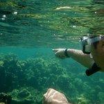 Snorkelling nas Islas Rosario