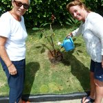 Planting our tree :)
