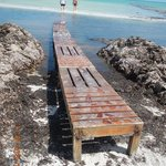 Bridge over seaweed