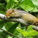 petit ecureuil dans les jardins de l'hotel