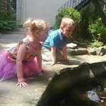 Looking at fish in the pond