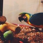 Light il pappagallo