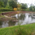 Pond Area in Rear of Property