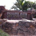 Shark bay! Terrific