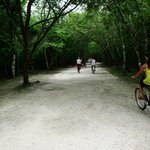 Bike paths through the jungle to the temples & pyramids