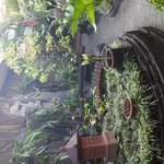 relaxing garden area