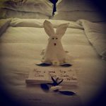 Welcoming rabbit
