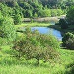 Arboretum lookout