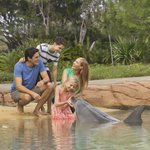 Get up close and personal with Animal Adventures at Sea World